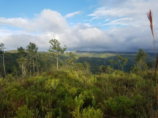 Mountain Pine Ridge, Belmopan Cayo
